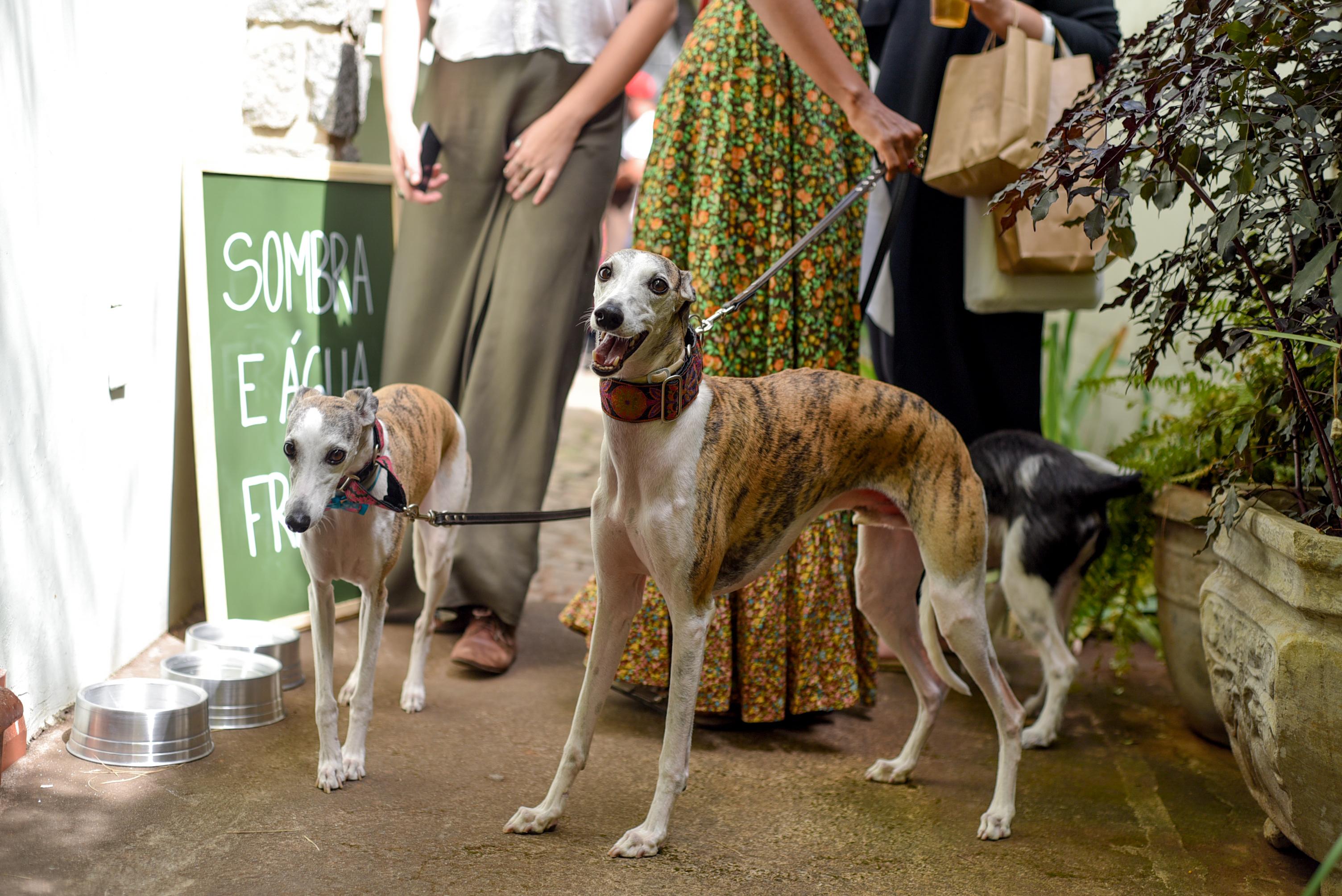 Cachorros na Feira Fresca Casa Ateliê