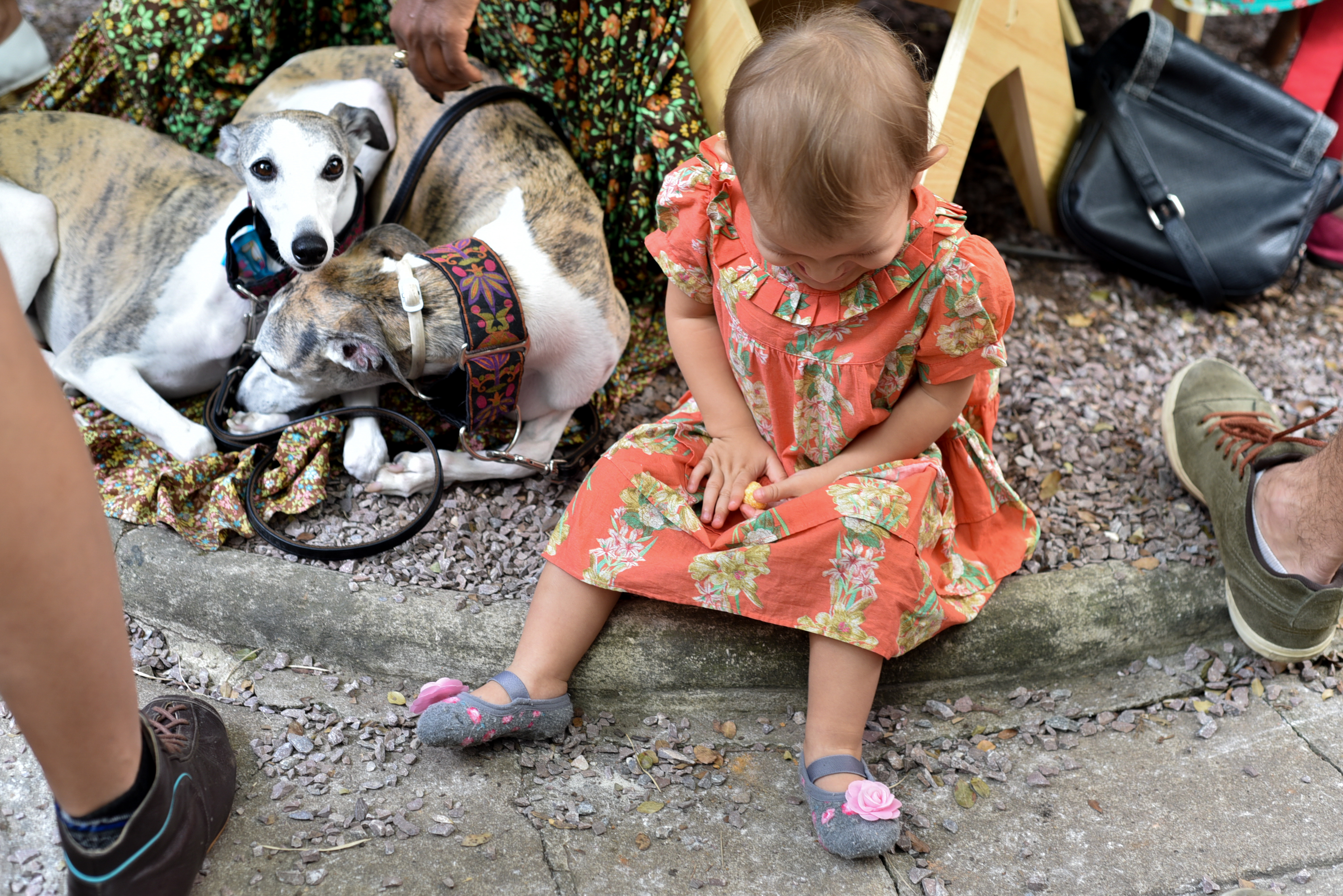 Jabuticabeira Feira Fresca Casa Ateliê - Criança e Cachorros