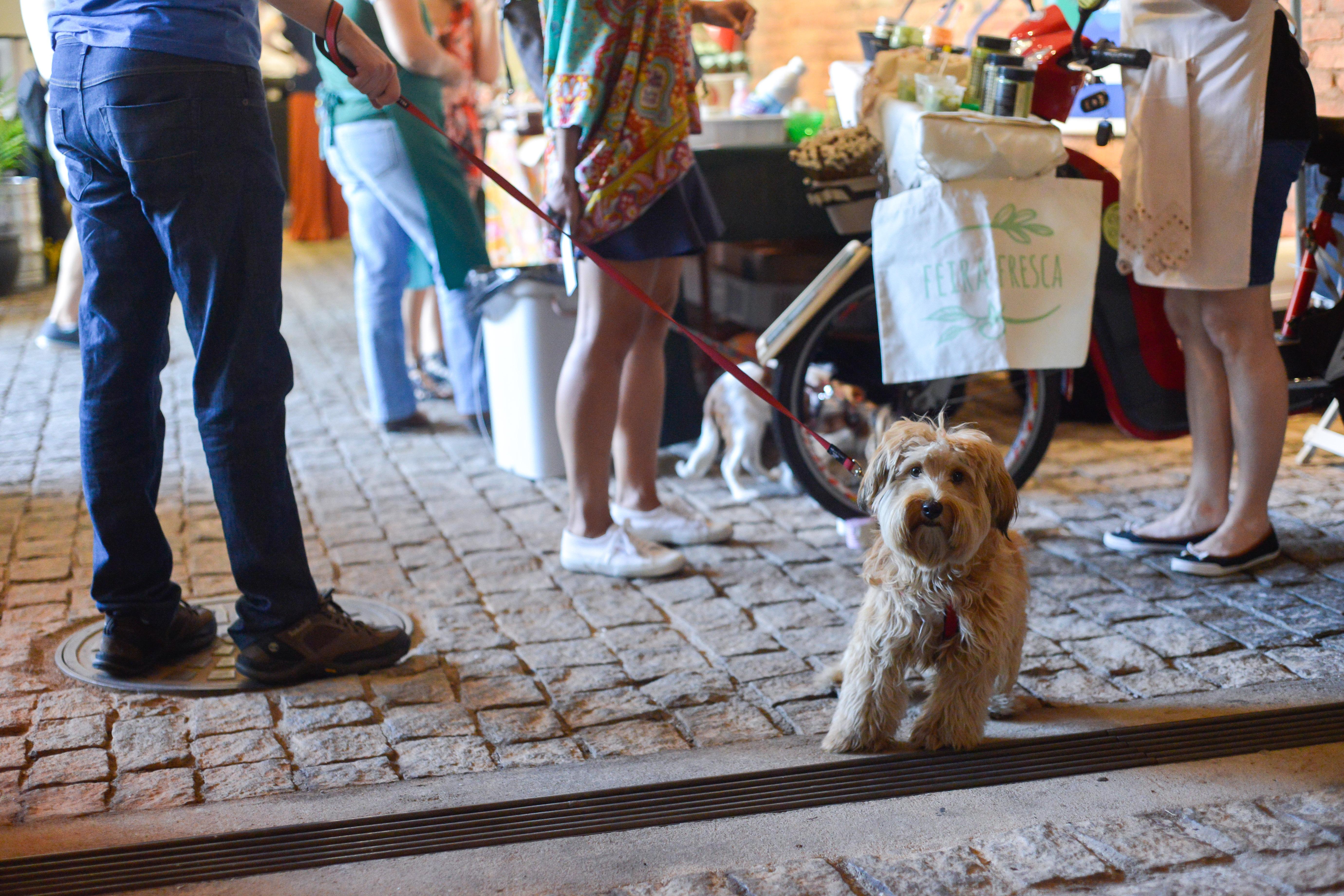Cachorro na Vila211 - Feira Fresca