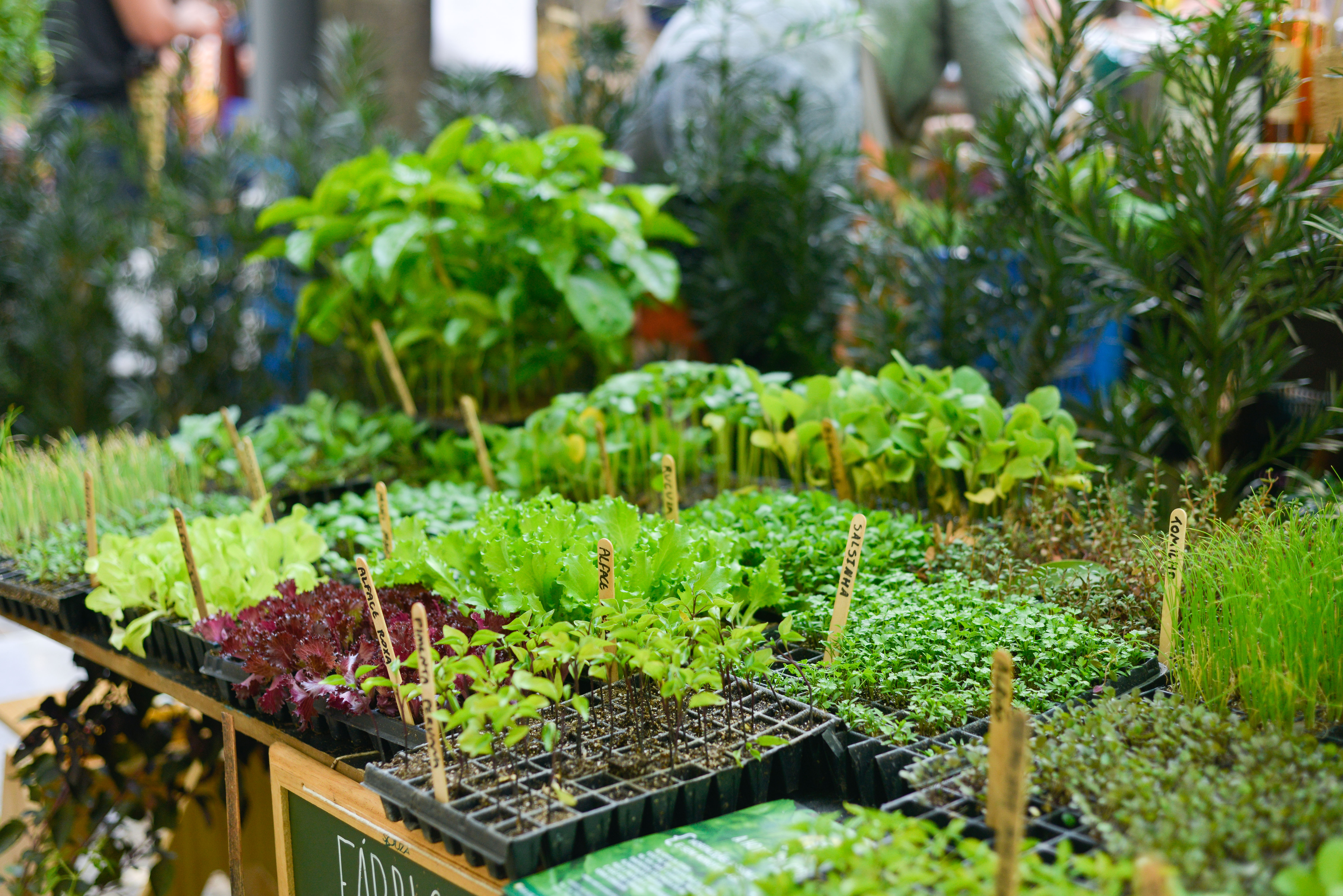 Fábrica de Hortas na Feira Fresca Green Up Savassi