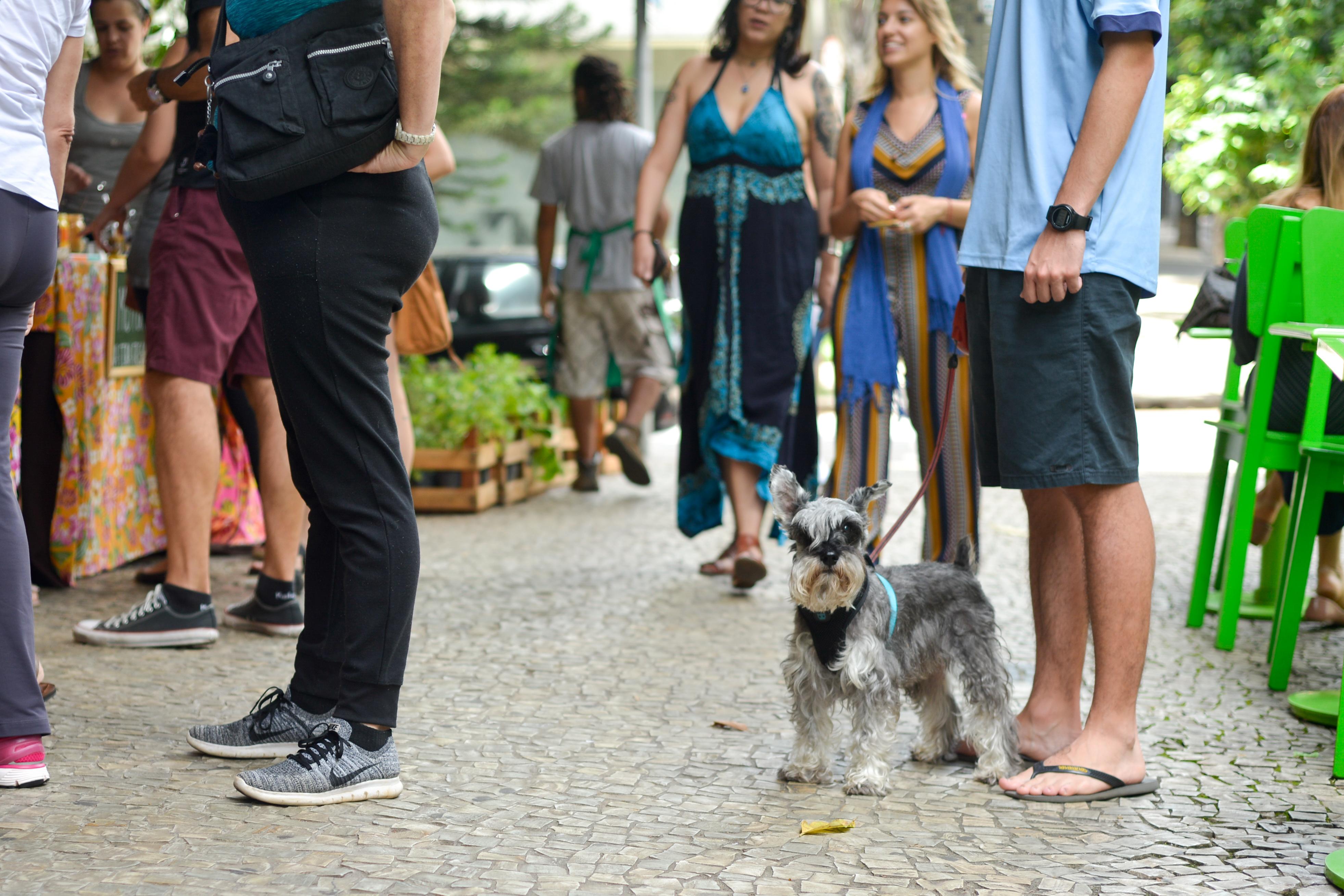 Cachorro na Feira Fresca da Carandaí