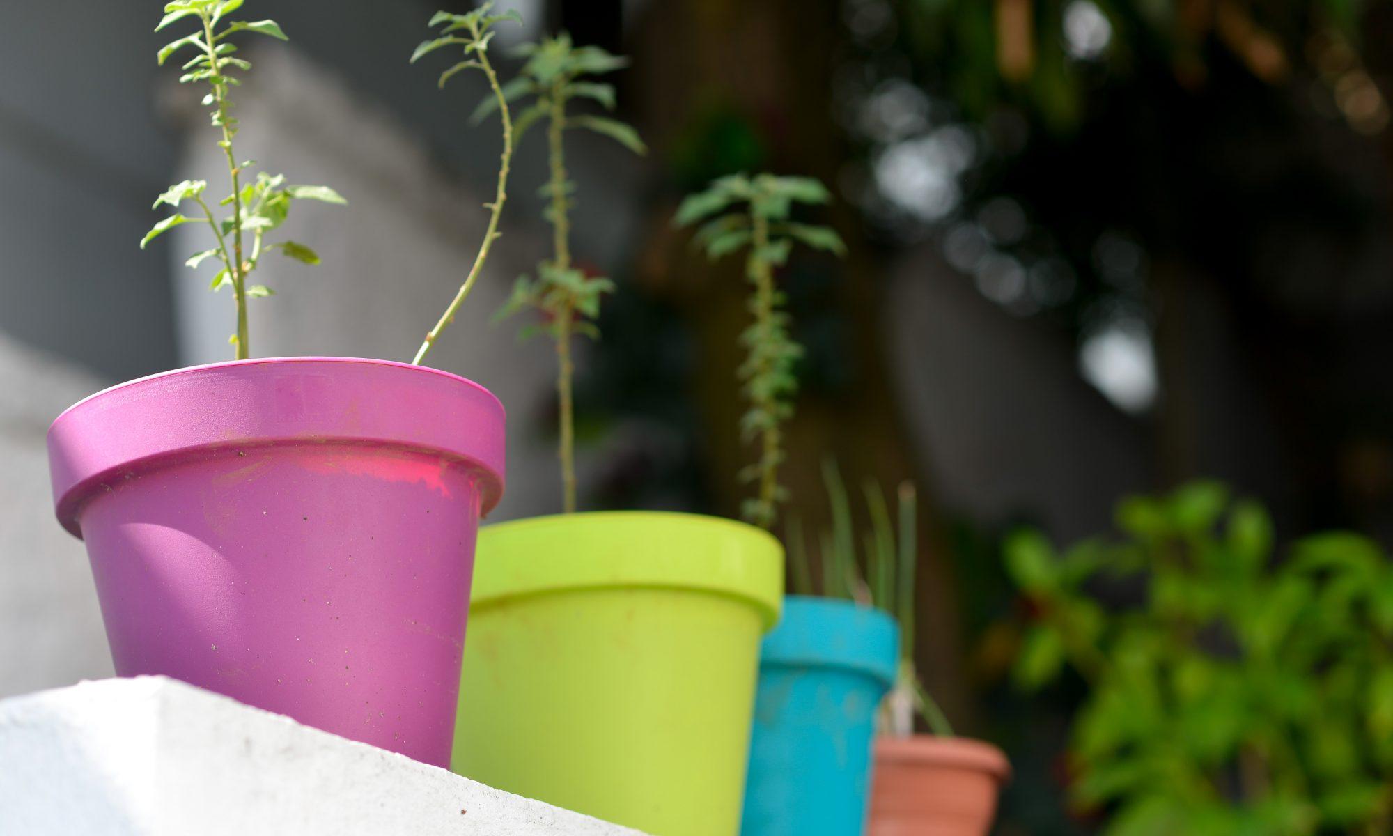 Plantas Casa Fresca