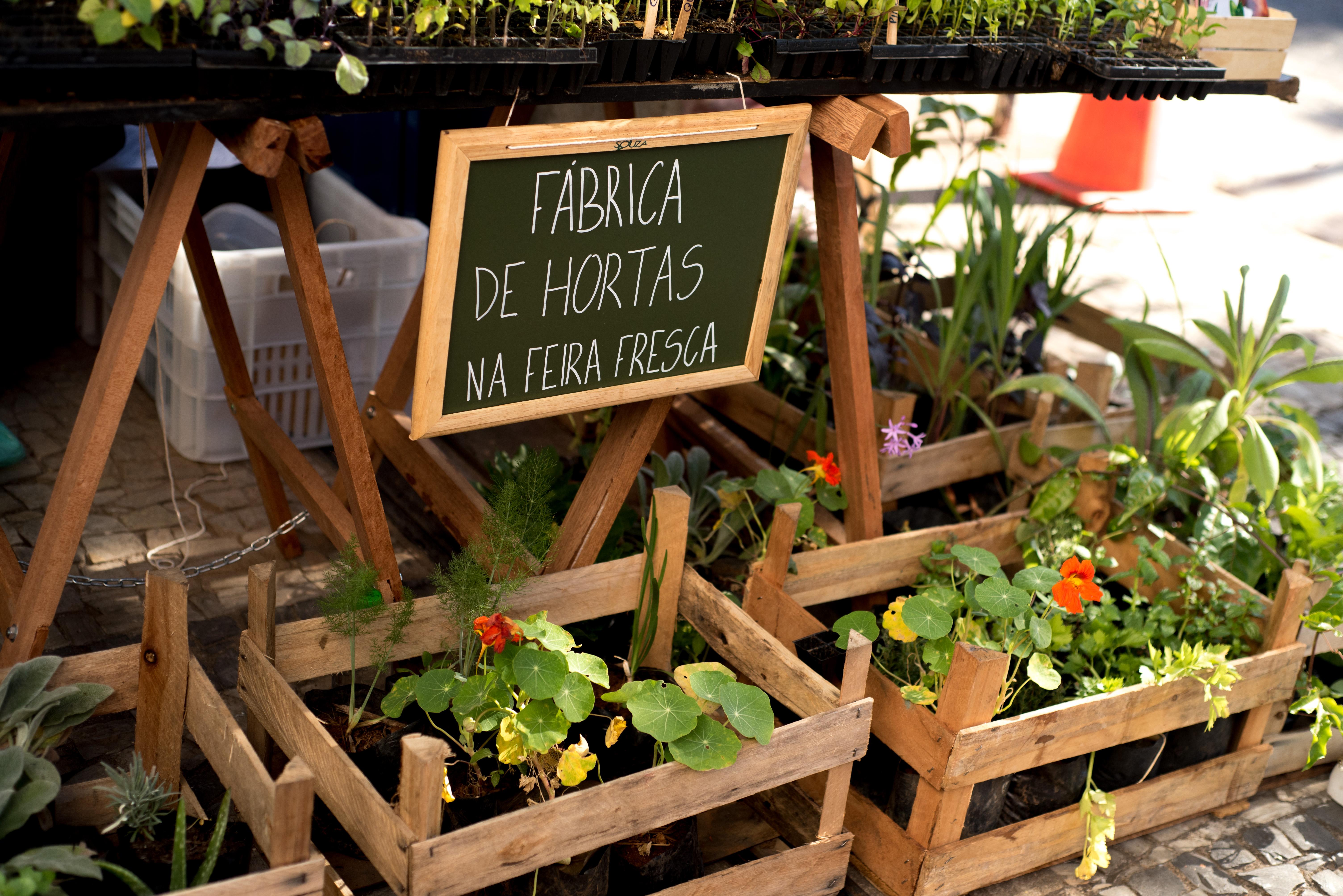 Fábrica de Hortas na Feira Fresca