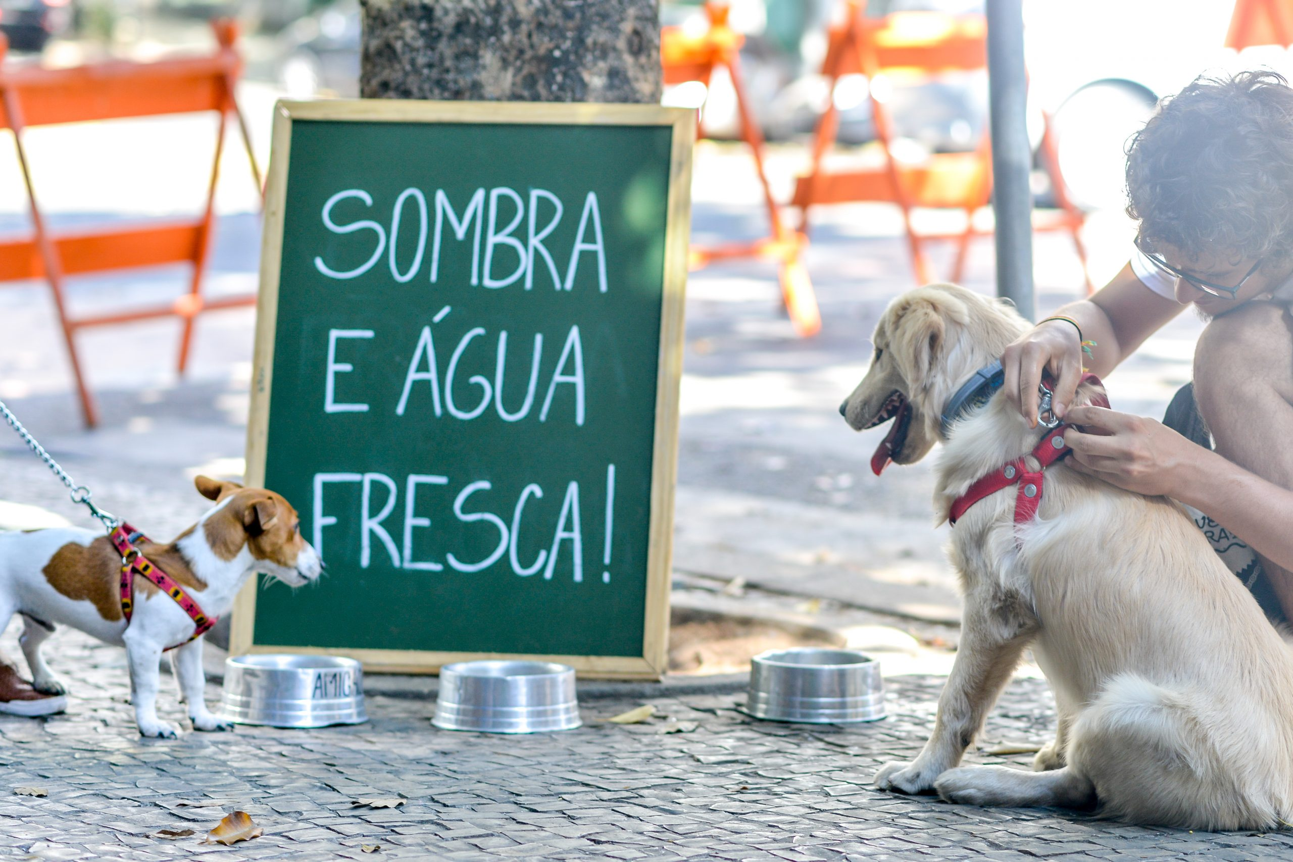 Feira Fresca Pet Friendly